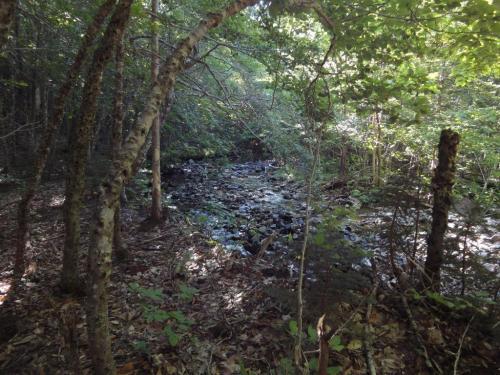 Trail to MacKenzie Falls