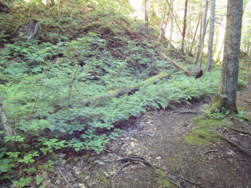 More on the MacKenzie Falls trail